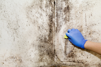 Does Your Home Have Mold? | Climate Control